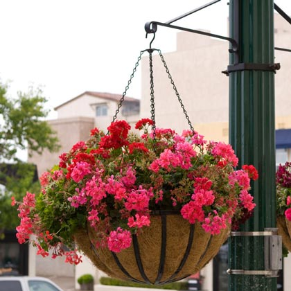 "Large Commercial ""English Garden"" Hanging Baskets"