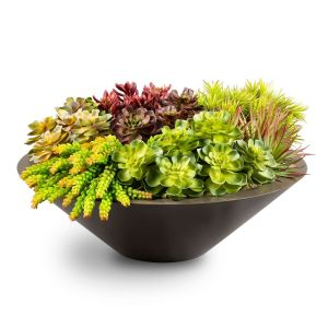 Minimalist Low Bowl Planter with array of small succulents