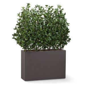 Shrub Dividers in Modern Fiberglass Planter 6-8'H, Outdoor