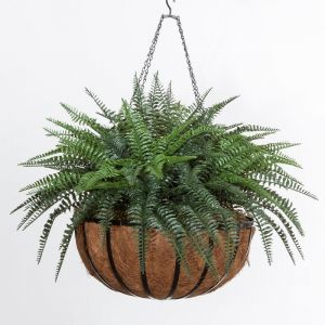 Boston Fern in 22in Hanging Basket, Outdoor Rated