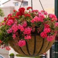Hanging baskets for cities